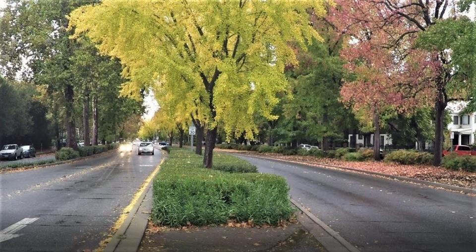 street and trees